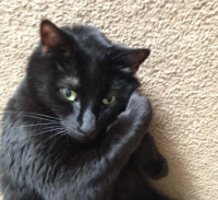 biscuit black cat