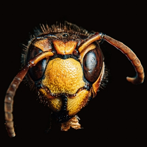 american wildlife wasp